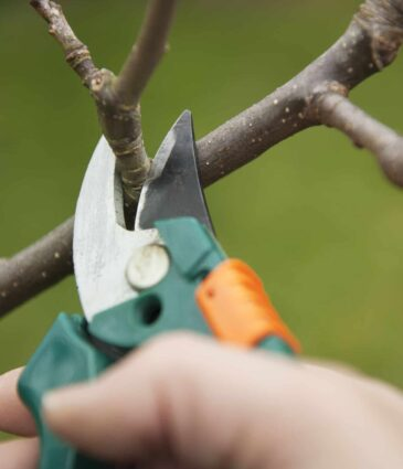 Spring Pruning Techniques & The Best Time To Prune Which Plants