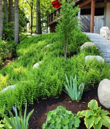 The Benefits of Native Plants